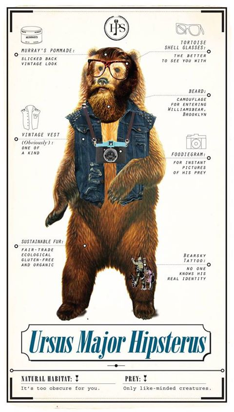 Ursus Major Hipsterius